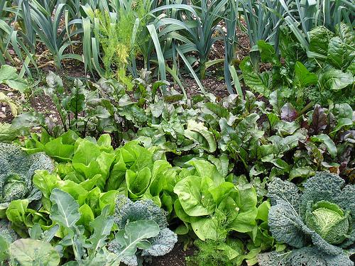 Gardening 365
