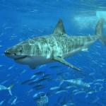 endangered great white shark