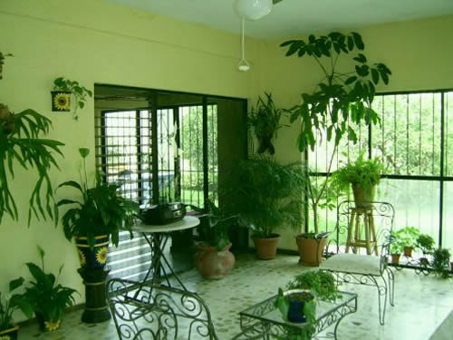 Houseplants The Best Eco Friendly Air Cleaner Green