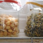 The Benefits of Soaking and Sprouting Beans, Nuts, Seeds and Grains