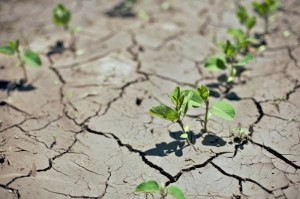 drought and plants