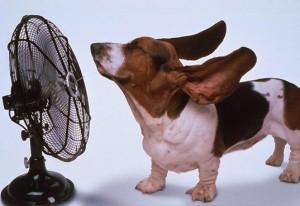 keep cool dog