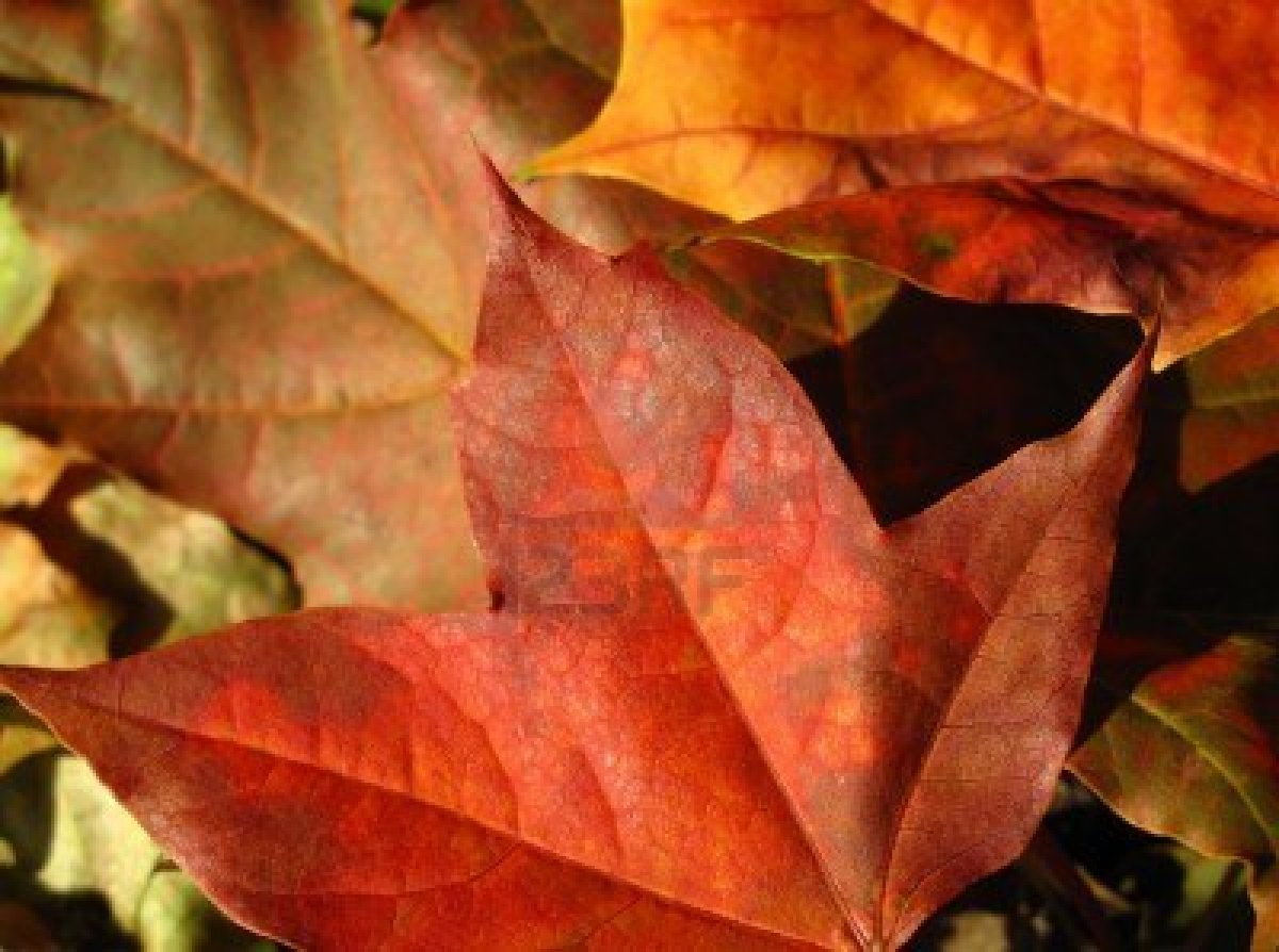 Autumn Equinox - Fall into Transitions - Green-Mom.com