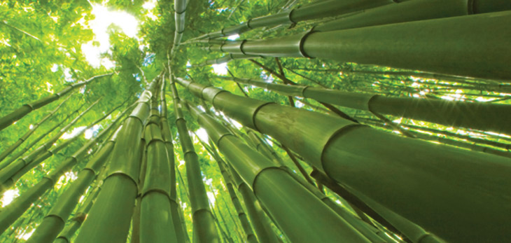bamboo is sustainable because it requires no pesticides irrigation or fertilizers so growing organic bamboo is cheap and easy - Growing Bamboo