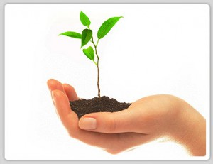 green-tips-for-a-reduced-carbon-footprint-300x231