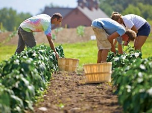 organic-farms-400x298