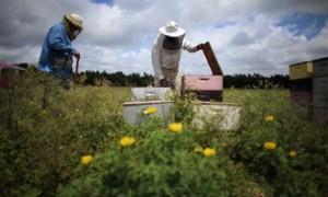 Honeybee farmer