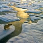 Arktis EisbŠren