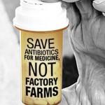 antibiotics in factory farms