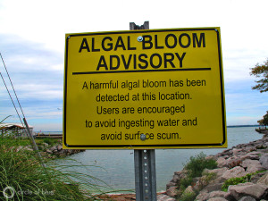 Algea bloom caused water restricion