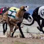 Dog Racing Losing Popularity