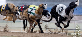 Dog Racing Losing Popularity