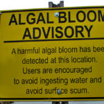 Algae Bloom Caused by Chemical Fertilizers To Blame forContaminated Drinking Waters inOhio