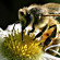 Let It Bee — Time To Protect the Bees
