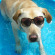 Dog Summer Safety Tips