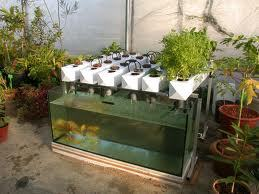 Five Years Later Its Now A Solar Powered Closed Loop Organic Food Production Ecosystem Using Aquaponics Hydroculture The Garden Pool Feeds Family Of