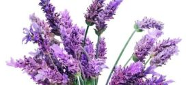 Tips on How To Use Lavender Essential Oils