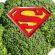 How Super Is Super Broccoli?