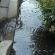 Curbside Garden Capture Storm Water
