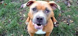 Abused Dogs Gets New Leash On Life