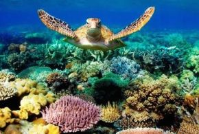 Threats To The Great Barrier Reef
