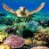 Great-Barrier-Reef feature