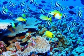 Ocean Life Facing Mass Extinction–Time For Change Is Now