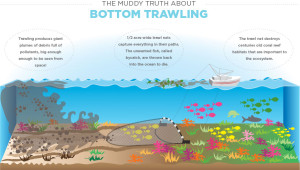 bottom-trawling