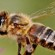 Sweet Tips for Honey Bees in Winter