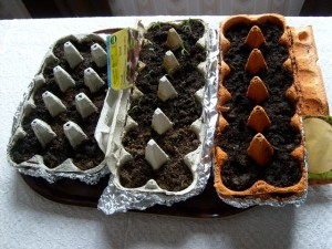 egg cartons seeds