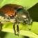DIY Organic Pest Control