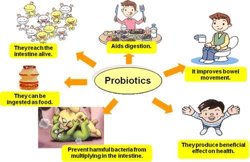 What are the main probiotics