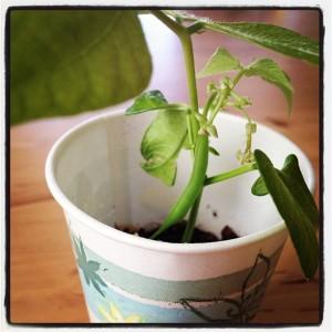 Paper-cup-planter