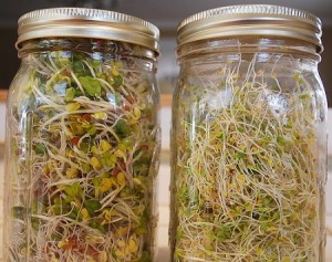 sprout jars