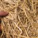 wheat straw feature