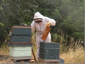Examining a honeycomb main