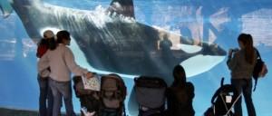 orcas at sea world