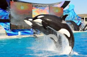 sea world orca