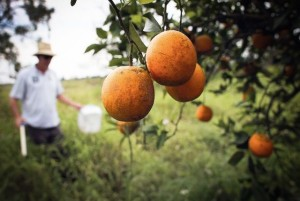 fighting pesticides with souns