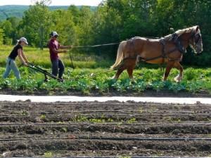 Farm-Apprenticeship