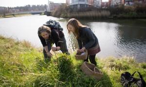Urban foraging