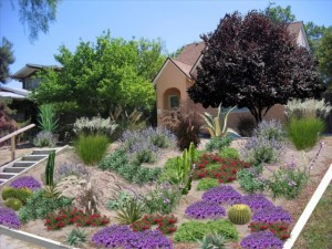 drought-plants