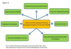 endocrines