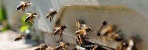 hive-bee